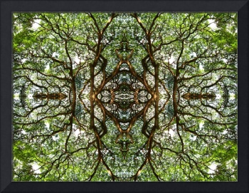 MIRRORED TREES, V.12, Edit D