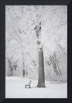 Trees And A Park Bench Covered In Snow, Winnipeg,