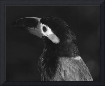 Bird in Black and White