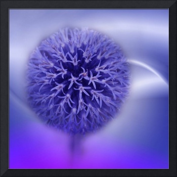 allium on texture -3-