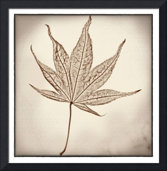 Essence of a Leaf with Border