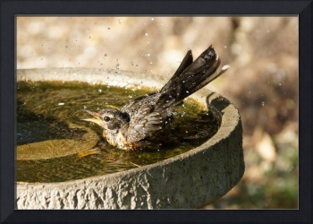 Bird bath fun time