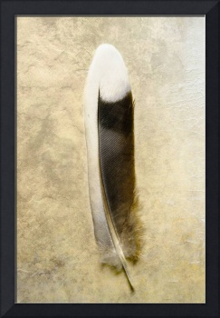 Dove tail feather