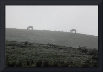 Horses on Hilltop