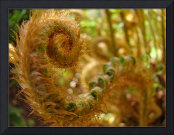 Fern Fronds art prints Forest Ferns Nature Baslee