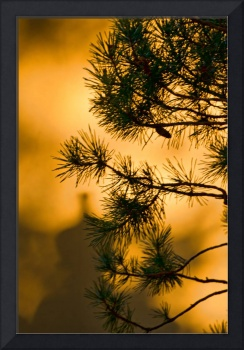 In the Shadows Beyond the Pine