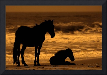 Wild Horse of Outer Banks, NC