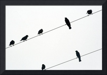 Black Birds on a Wire