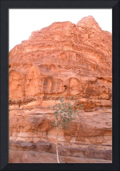 Wadi Rum's Lonely Tree Mountain
