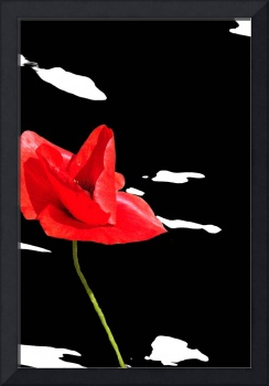Red poppy on black and white