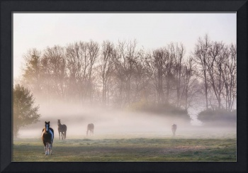 Morning on the Pasture by Jim Crotty
