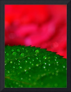 Rose leaf with dew abstract