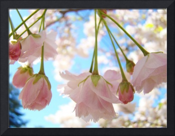 Spring BLOSSOMS 52 Pink Tree Blossoms Art Gifts