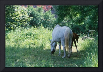 Giverny Mare and Foal Landscape