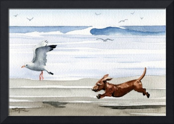 Dachshund at the Beach chasing seagull