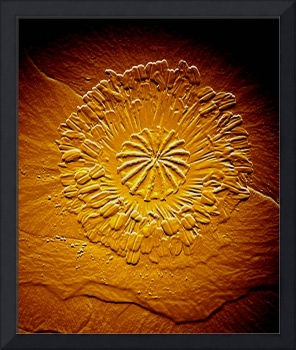 Fossilized flower