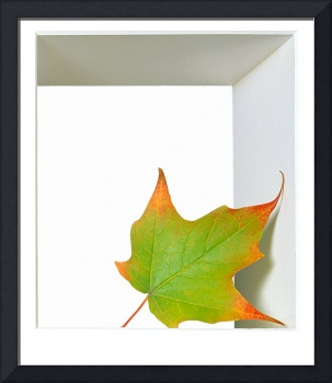Green fall leaf with orange tips leaning inside a