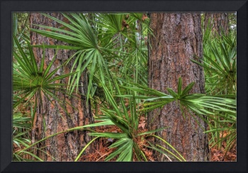 Palms and Pines Hunting Island