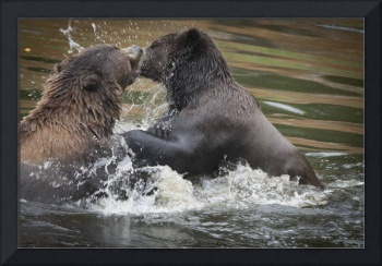 Wrestling Brown Bears