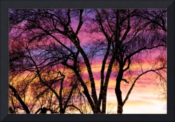 Colorful Silhouetted Trees 31