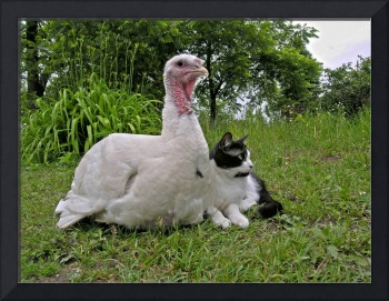 Friends: Turkey and cat