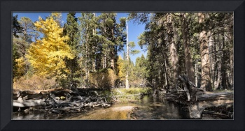 Day 14 - Parker Creek Panorama
