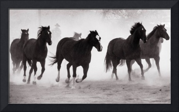 Red Cliffs Lodge Horses-4274