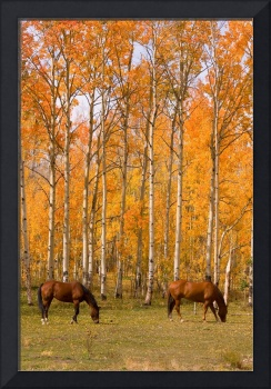 Two Grazing Horses in the Colorado Autumn Colors