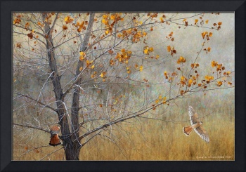 autumn meadow with kestrels