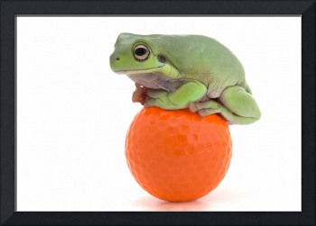 Frog Sitting On A Golf Ball