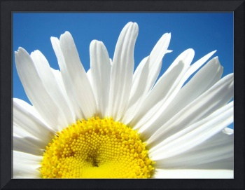 Daisies art prints White Daisy Summer Floral