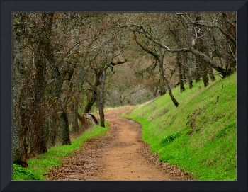 Mount Diablo Winter Path