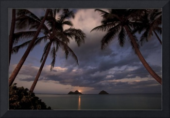 pacific moonrise between the palms at lanikai, haw