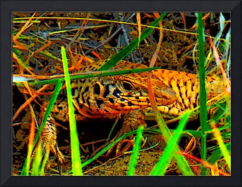 Whiptail in the grass