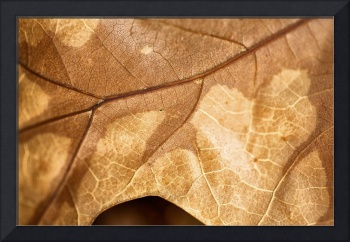 Fall Texture 3