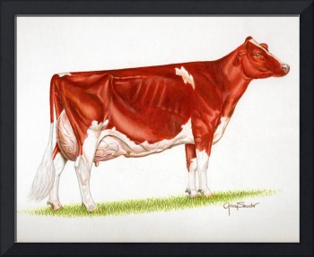 Red & White Holstein Cow