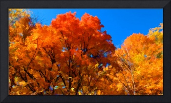 Peak Fall Autumn Color,Red,Orange,Yellow Leaf Tree