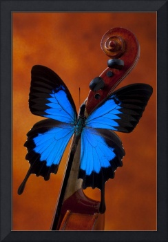 Blue Butterfly On Violin