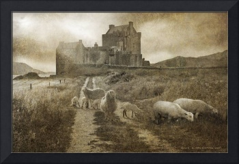 back road to eilean donan with sheep