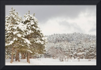 The forest under snow in the winter