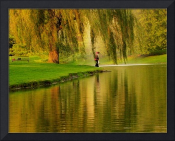 Weeping Willow Tree Nature Landscape Meditation Wa