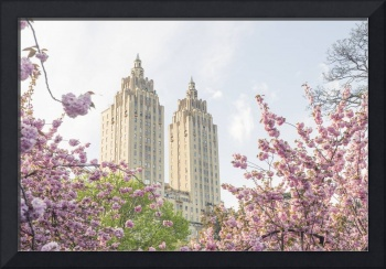 Central Park West Architecture with Cherry Blossom