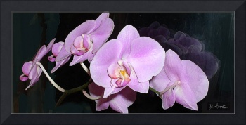 Pink-Orchid-Glory