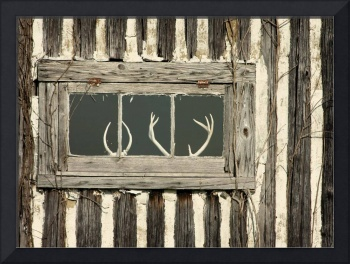 Deer Antlers in Window Frame