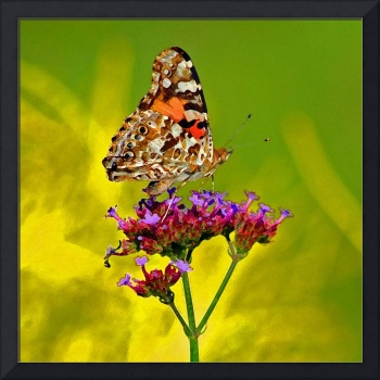 Butterfly  Bright Painted Lady Painted