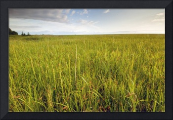 View of coastal grasses near the Campbell Creek ou