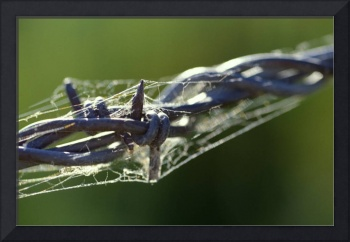 Web on Wire