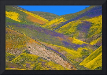 Carrizo's Wildflower Tapestry - Superbloom 2017