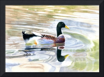 Colorful Duck Reflections