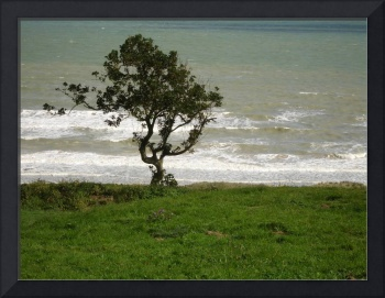 Tree at Omaha Beach